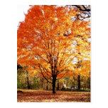Autumn Leaves Thanksgiving Postcard Postcard