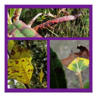 Autumn Leaves Three Panel Collage Poster