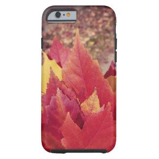 Autumn Leaves Tough iPhone 6 Case