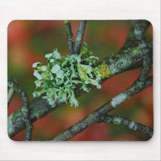 Autumn Lichen Mouse Mat