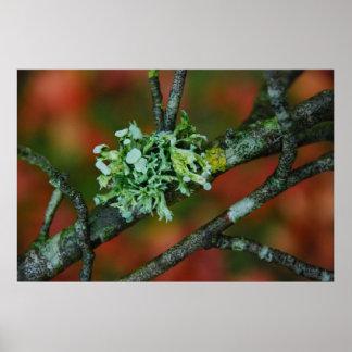 Autumn Lichen Poster