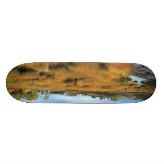 Autumn Low Tide Skate Board Deck