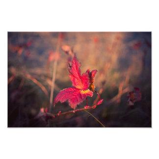 Autumn magic photo print