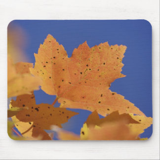 Autumn maple leaf and blue sky, White Mouse Pad