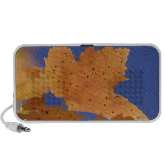 Autumn maple leaf and blue sky, White Speaker