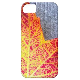 Autumn Maple Leaf iPhone 5 Cases