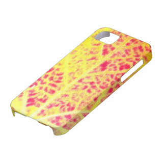 Autumn Maple Leaf Close / Abstract iPhone 5 Cover