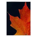 Autumn Maple leaf on black background Greeting Card