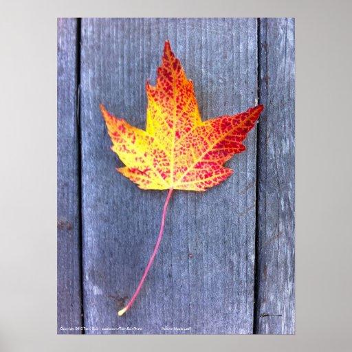 Autumn Maple Leaf Posters