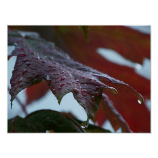 Autumn maple leaves after rain print