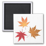 Autumn Maple Leaves Collection Square Magnet