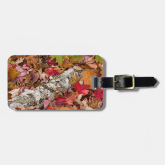Autumn Maple Leaves Cover Birch Bark On Forest Luggage Tag