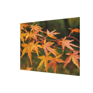 autumn maple leaves stretched canvas prints