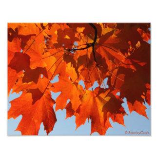 Autumn Maple Print Photo Print