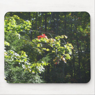 Autumn Maple Tree Colours Mouse Pad