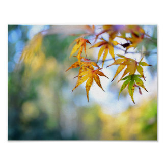 autumn maple tree leaf nature abstract detail back poster