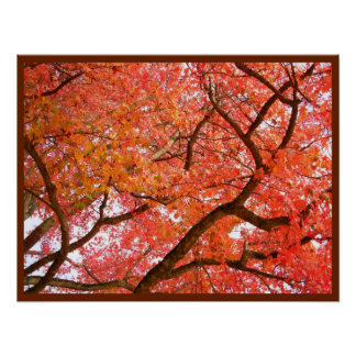 Autumn Maple Trees Print Landscape Poster