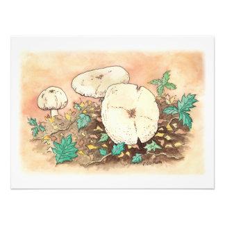 autumn mushrooms landscape photo prints