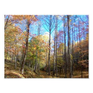 Autumn Nature Path Photographic Print