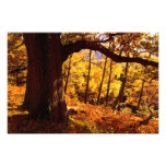 Autumn, near Aira Force, The Lake District Photographic Print