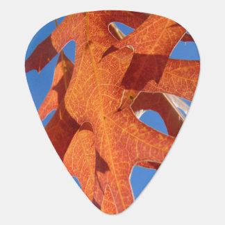 Autumn Oak Leaves Guitar Pick