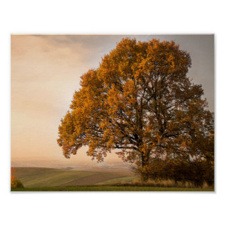 Autumn Oak Tree with Golden Leaves Value Poster