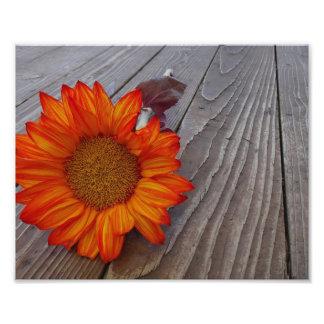Autumn Orange Sunflower Blossom Photo
