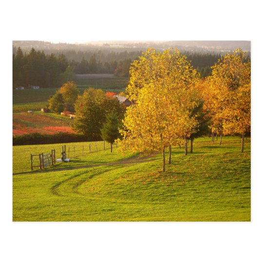 Autumn Path Postcard