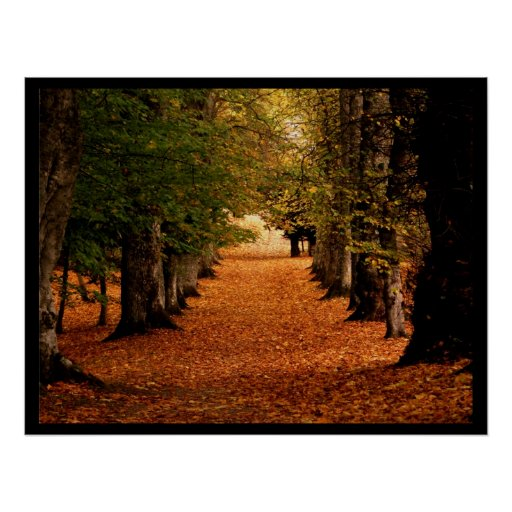 Autumn Path Poster Print