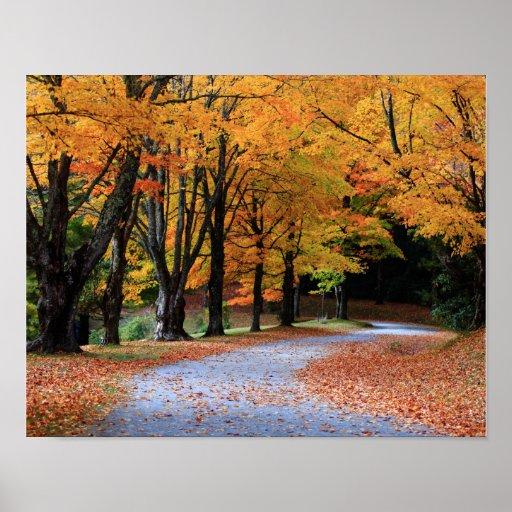 Autumn Pathway Poster