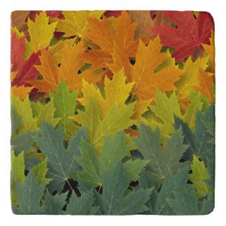 Autumn Pattern 2 Trivet