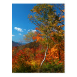 Autumn Pictures Postcard