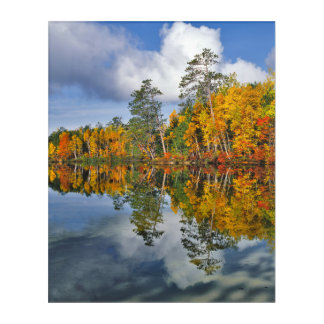 Autumn pond reflections, Maine Acrylic Print