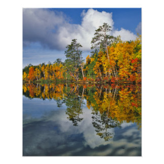 Autumn pond reflections, Maine Poster
