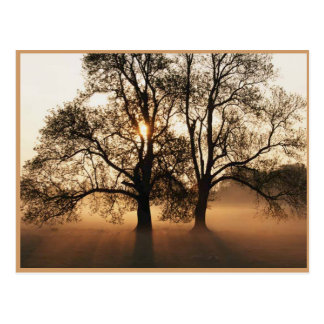 Autumn Post Card