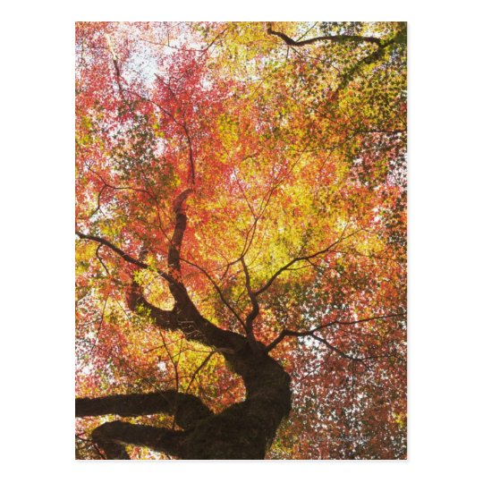 Autumn Postcard