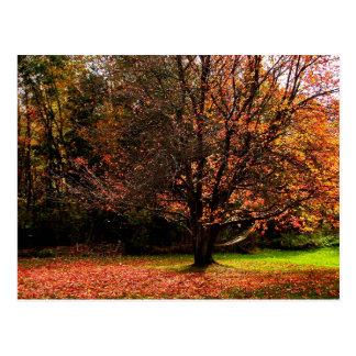 Autumn Postcard 1