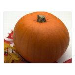 Autumn Pumpkin Post Card