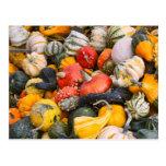 Autumn Pumpkins, Gourds and Squashes Post Card