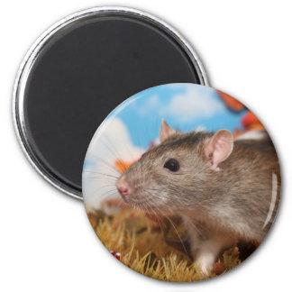 Autumn rat magnet