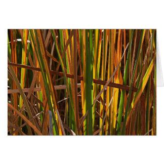 Autumn Reeds Number 1 Card