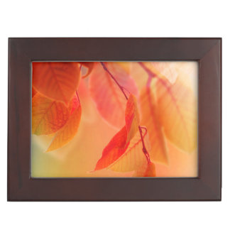 Autumn Scene Memory Box