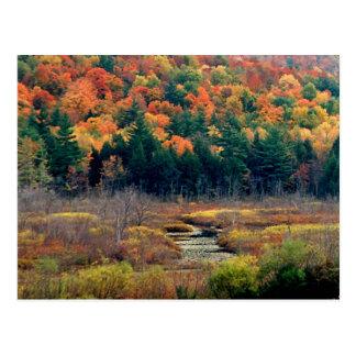 Autumn Scene Postcard