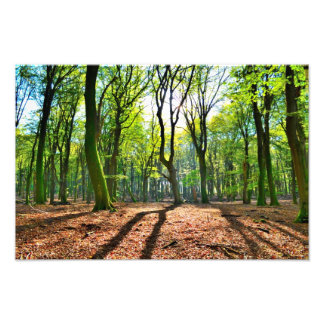 Autumn shade photographic print