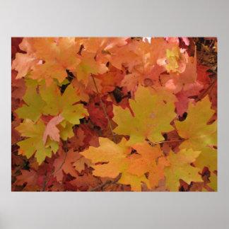 Autumn Splendor (1) Poster