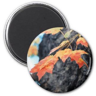 Autumn Splendor 6 Cm Round Magnet
