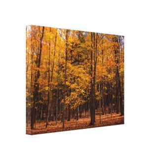 Autumn Splendor Canvas Prints