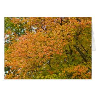 Autumn Splendor Greeting Card