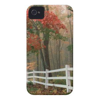 Autumn Splendor iPhone 4 Case-Mate Cases
