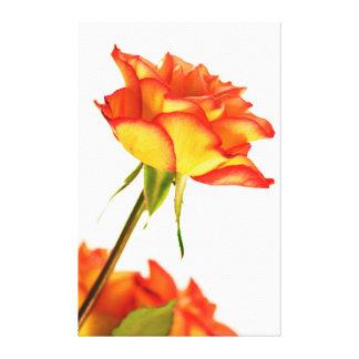 Autumn Splendor Fire Rose Flower Canvas Stretched Canvas Prints